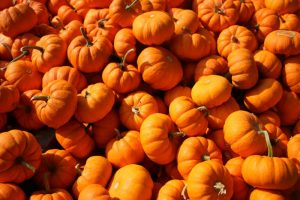 fall-and-winter-events-pumpkin-patch